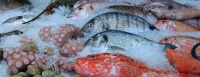 fish-480830_640