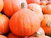 pumpkins-469593_640