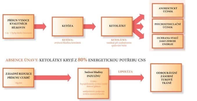 Přehledný graf benefitů ketózy (zdroj)