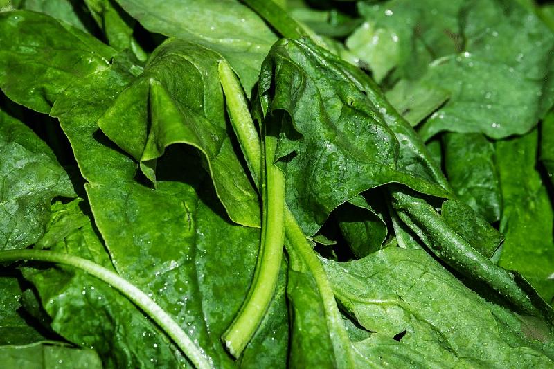 4+1 recept ze špenátu