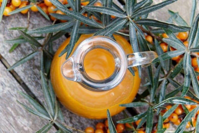 Rakytník – jaké vitamíny obsahuje a na co ho můžeme použít
